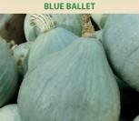 MOLIŪGAI BLUE BALLET