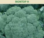 BROKOLIAI MONTOP H