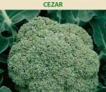 BROKOLIAI CEZAR