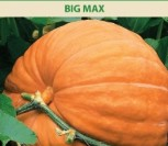MOLIŪGAI BIG MAX
