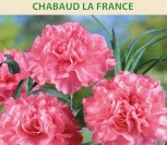 GVAZDIKAI TIKRIEJI CHABAUD LA FRANCE