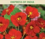 NASTURTĖS ŽEMOSIOS EMPRESS OF INDIA