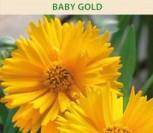 STAMBIAGRAIŽIAI GLUDAI BABY GOLD
