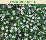ŠIRDIŠKOSIOS SUTEROS (BAKOPOS) SNOWTOPIA WHITE