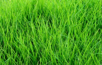 Vienanarės žolės