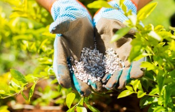 Dekoratyvinių augalų trąšos