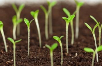 Žemės mišiniai biohumuso pagrindu