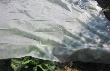 Agroplėvelės
