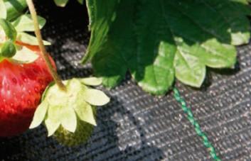 Agrotekstilinė medžiaga