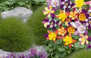 Gėlių sėklų mišiniai
