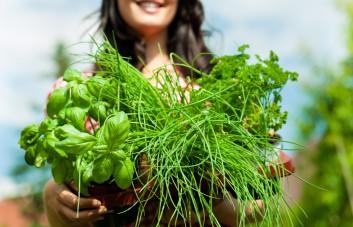 Prieskonių ir retų augalų sėklos