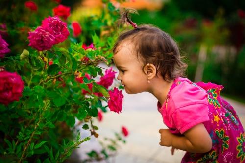 Keli nuostabūs faktai apie rožes ir jų rūšis