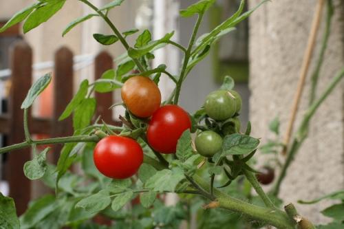 Gausus ir sveikas derlius jūsų balkone